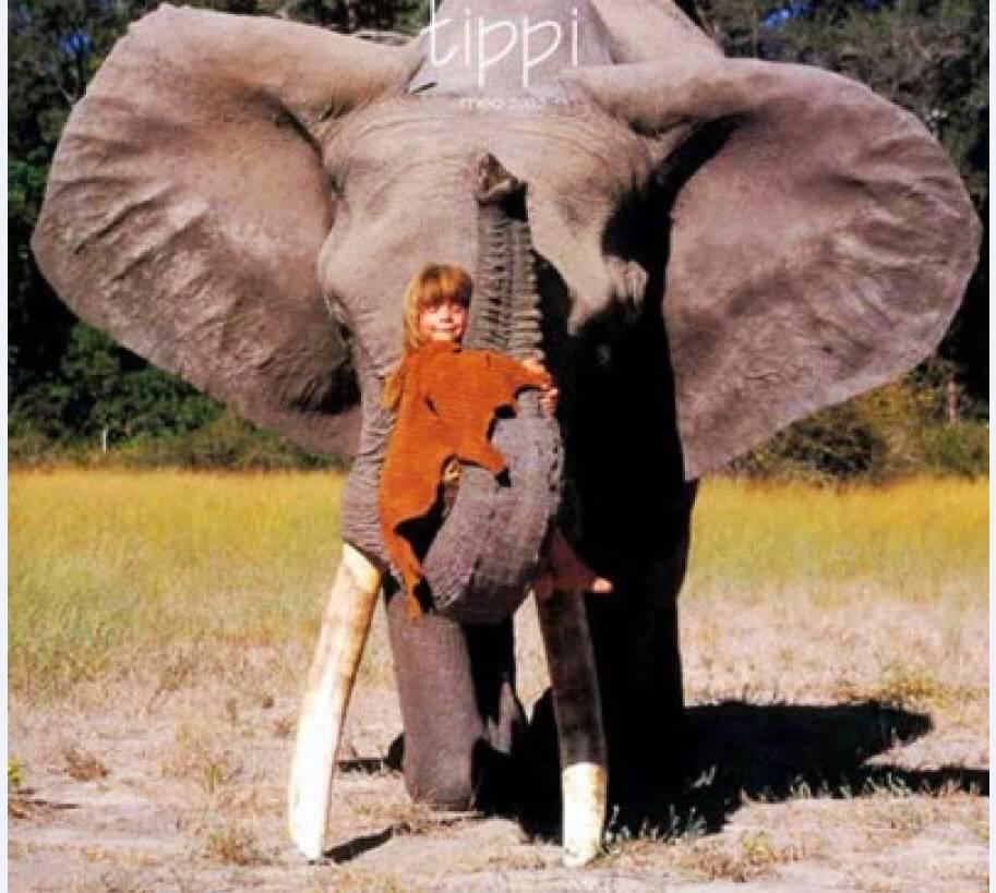 【少儿读物】我的野生动物朋友:10岁的小女孩,与动物一起成长-搜狐
