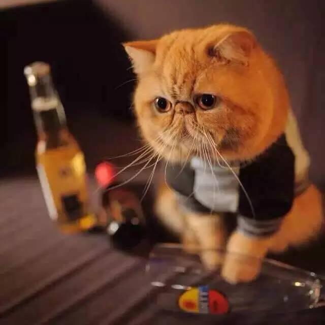 一个喜欢猫的男人_妹子最爱去的4家猫咪餐厅,男生们千万记得了