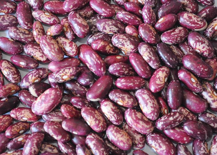 紫芸豆色选机怎样提升紫芸豆营养与品质?