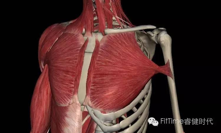 喙突胸小肌综合征的患者怎么治疗?