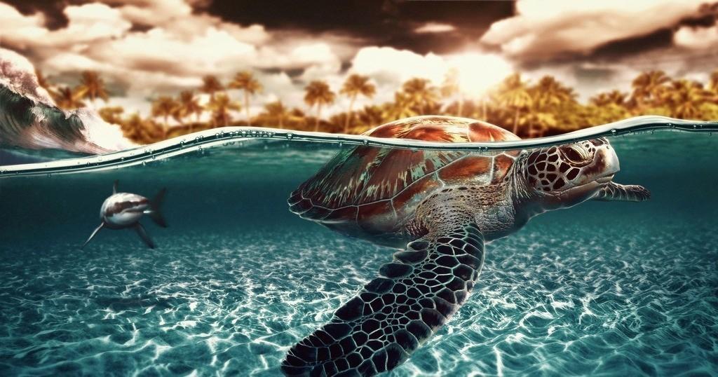 活动招募 海龟宝宝 回家的路好可怕,你能帮帮我吗