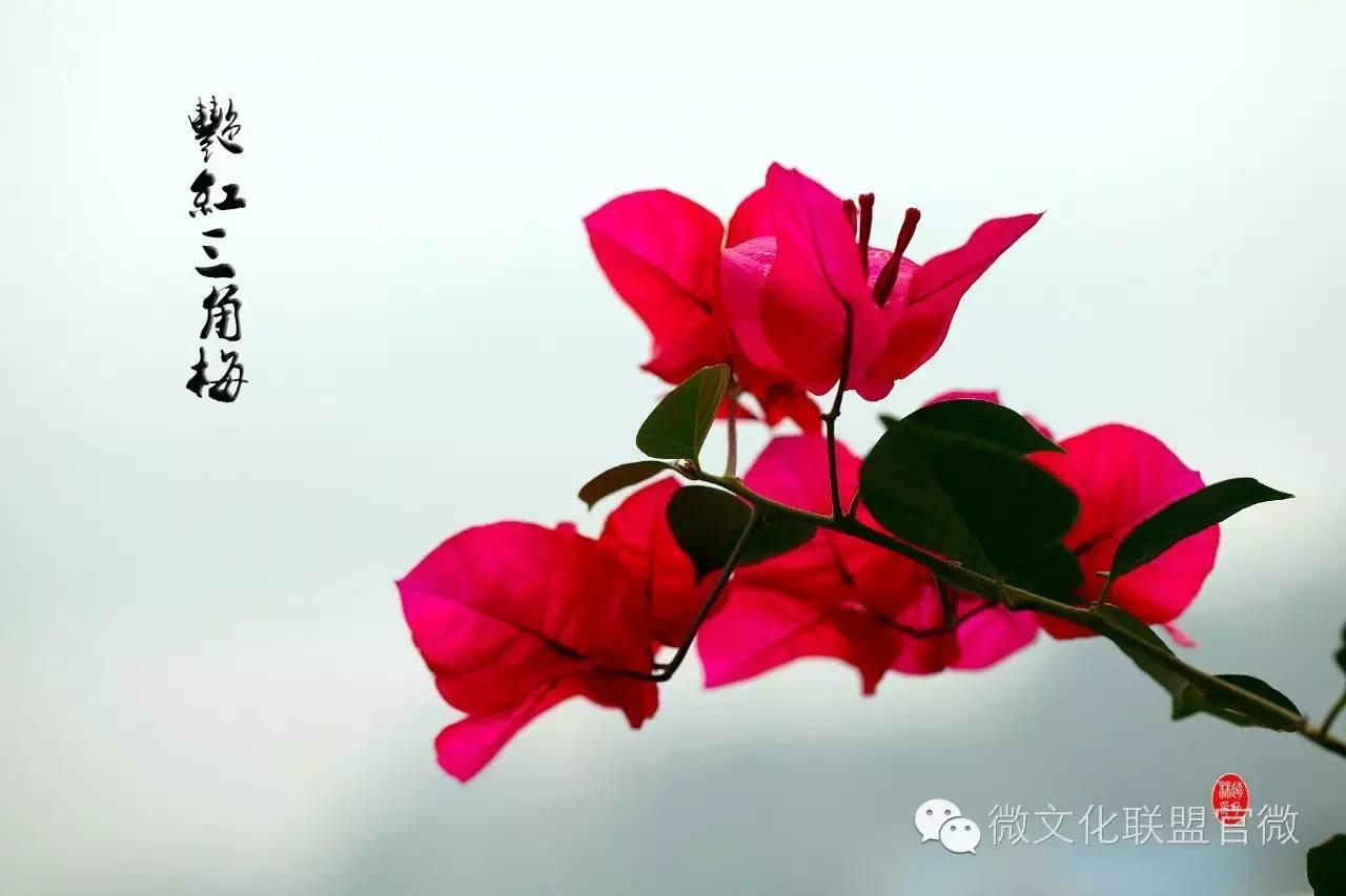 等到花也谢了_精美朗诵 | 我等到花儿也谢了