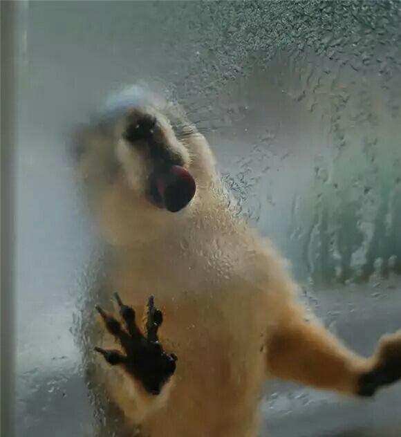 小动物看到玻璃都喜欢舔舔