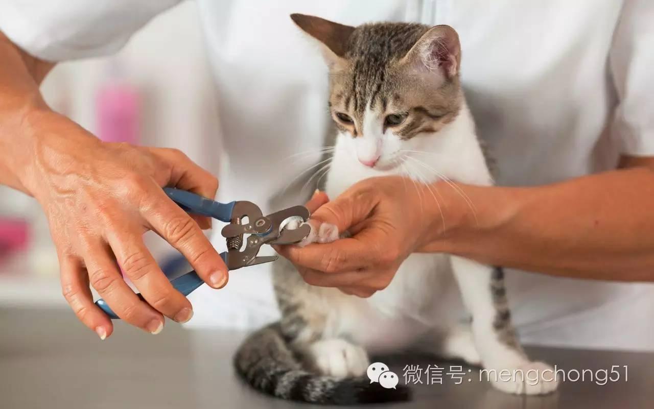 孕妇梦见给猫剪指甲