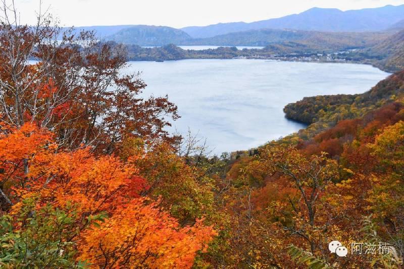 日本北东北的秋 邂逅最萌的秋田犬 吃世界第一的苹果 - 阿滋楠 - 阿滋楠的行摄笔记