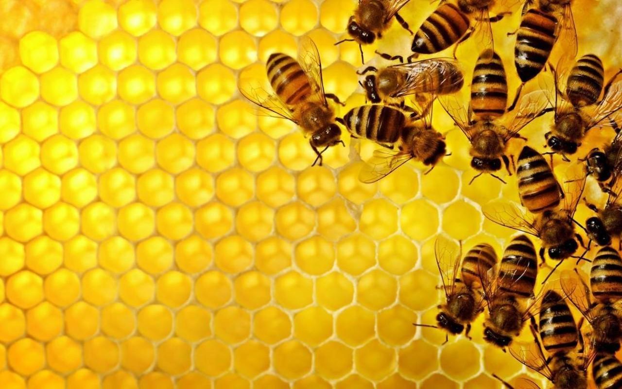 小少儿小蜜蜂,这个周末一起进入大象动物|乐园junglebook乌龟名字图片