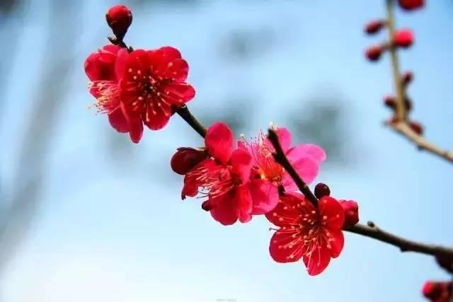 把花养死之后,你除了伤心就没认真想想原因 冬季养花秘笈,送你图片
