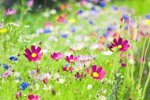 春天意境 图片
