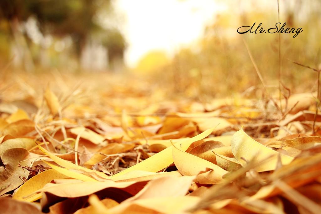 形容秋天的句子