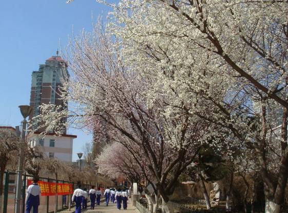 教育子弟09沈阳市第120正文皇姑区的高中呢,一般都选择上一二零中学艺术类山西的图片
