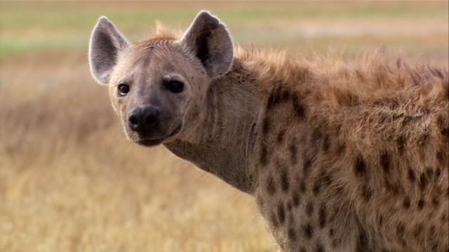央视纪录频道《致命动物总动员》第一