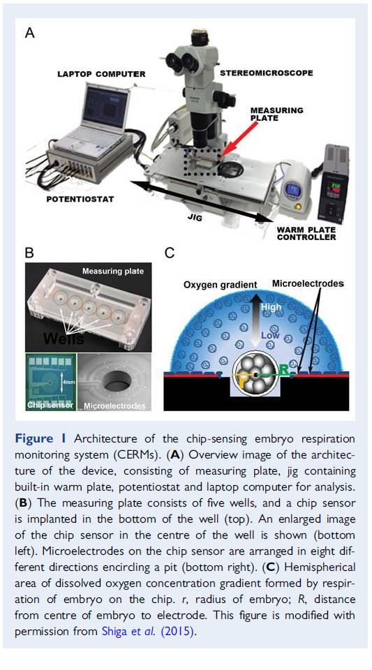 通过监测胚胎氧耗来评估胚胎发育潜力