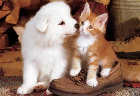 如何才能让狗狗不挑食 狗狗挑食怎么办