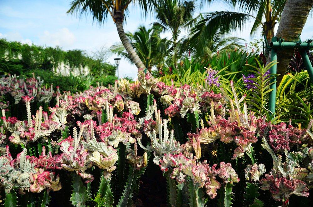 阿凡达附体,新马一起造潘多拉 - 行者绿豆 - 陌路如花