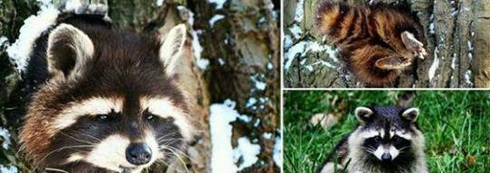 动物各种奇怪姿势卡头