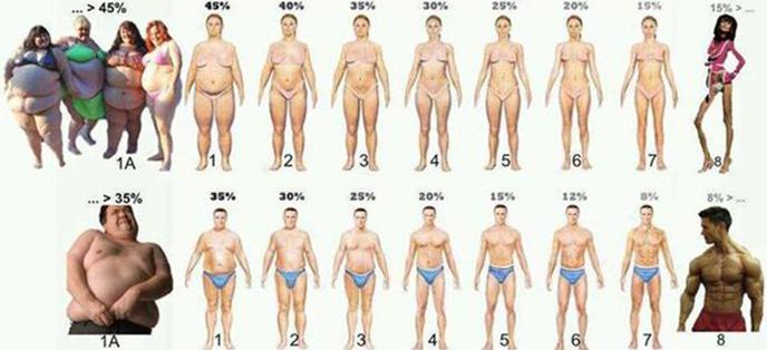 体脂肪偏低