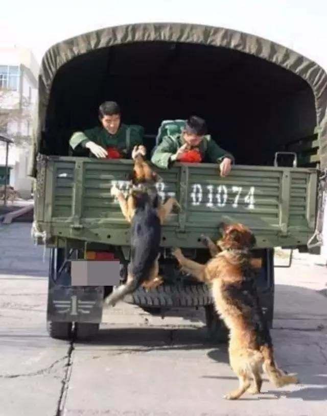 军犬哭囹�a��(�-c_退伍之前,这位老兵最后一次给军犬喂食.