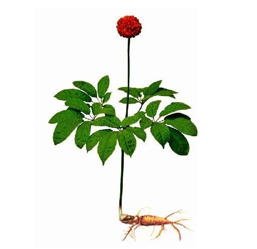 扭兴法则 种植中草药如何快速打开市场