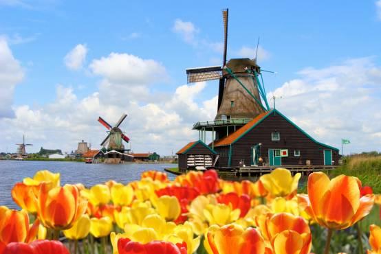 荷兰风车郁金香手绘图
