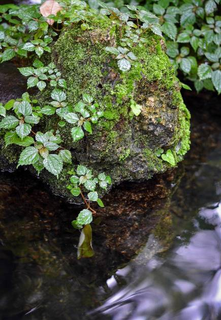 一方庭院深幽处,半卷闲书一壶茶  ...…读书烹茶 - 上善若氷 - 上善若水--心如止水,人的品行应如水一样
