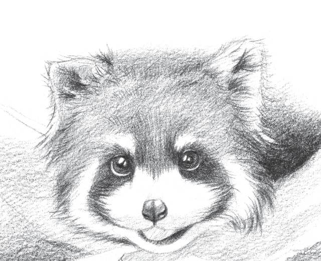 教你画一只小熊猫图片