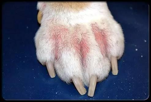 狗狗皮肤病_狗狗皮肤病的真相,我一定要告诉你!
