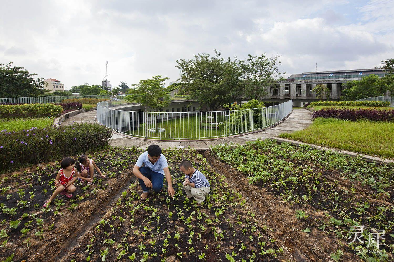 越南农场幼儿园:让孩子拥抱生活,亲近自然图片