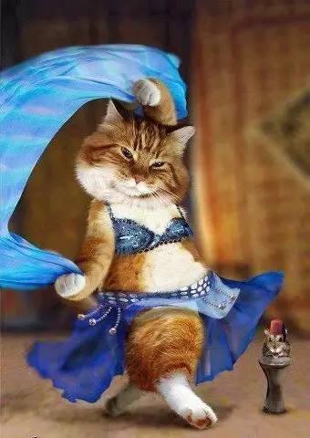 来了,怎么能不穿裙子呢?黑色的超短裙,彩虹色的小花裙穿在身在凉