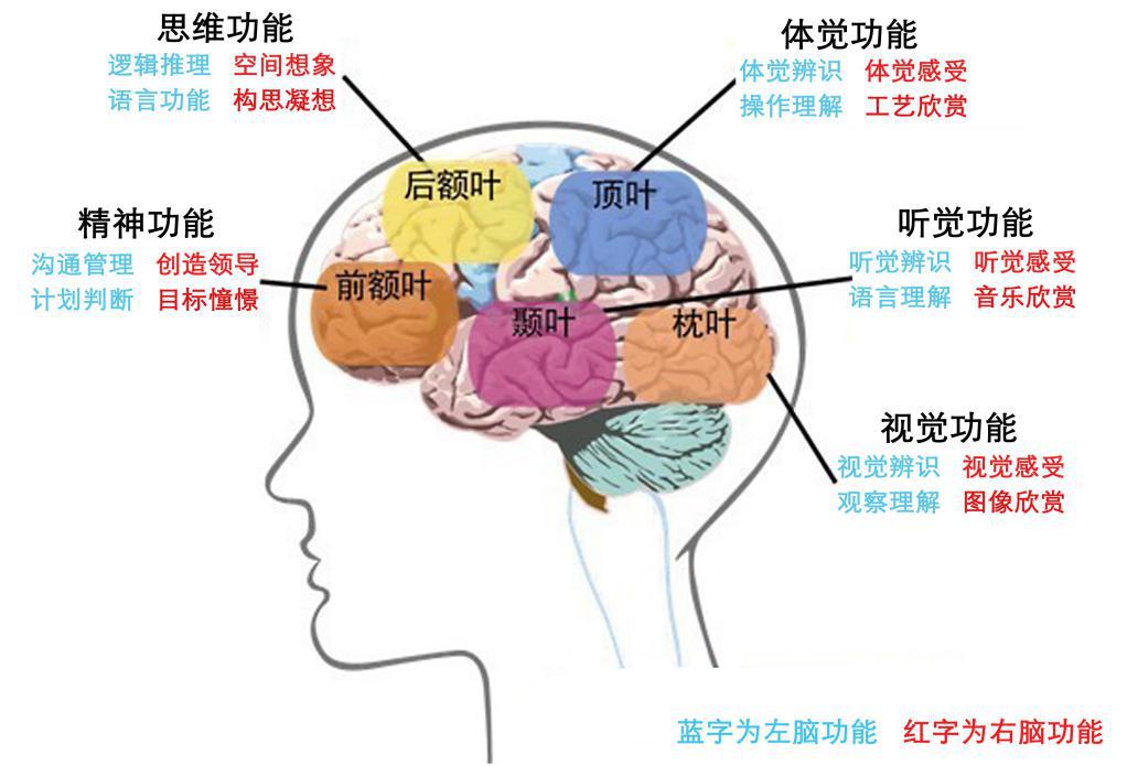 大脑结构与功能示意图