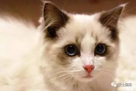 孕妇养猫注意事项_[小知识]猫主必知冬天养猫注意事项