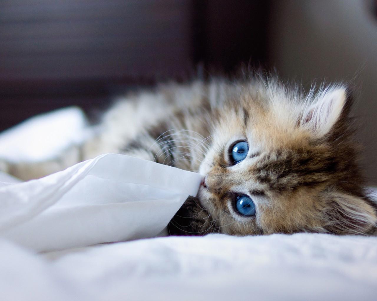 怎么改掉猫咪挑食的坏毛病 纠正猫咪挑食的方法