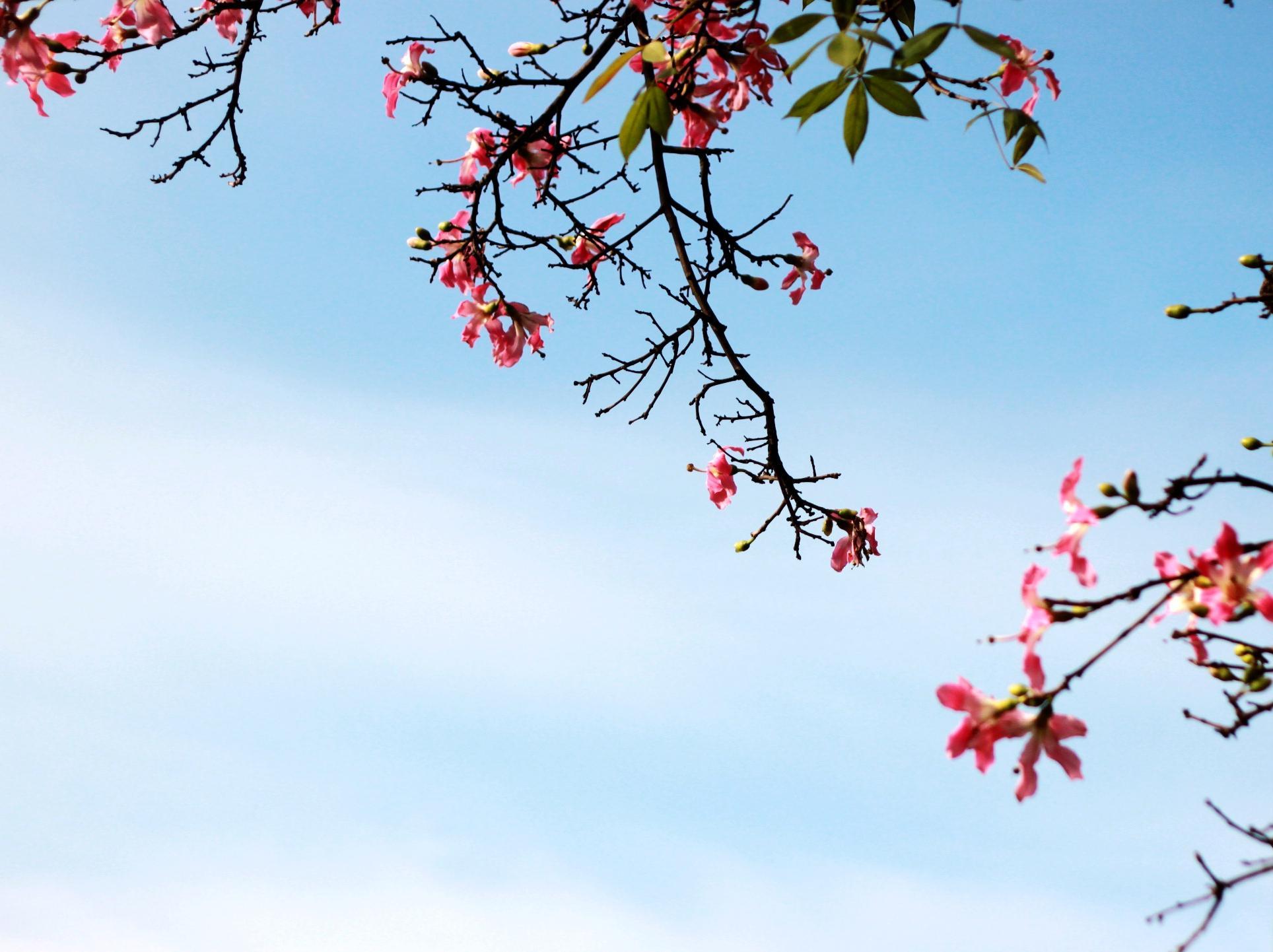 """花城繁花如海,羊城四季如春,冬季来广州赏花吧"""""""