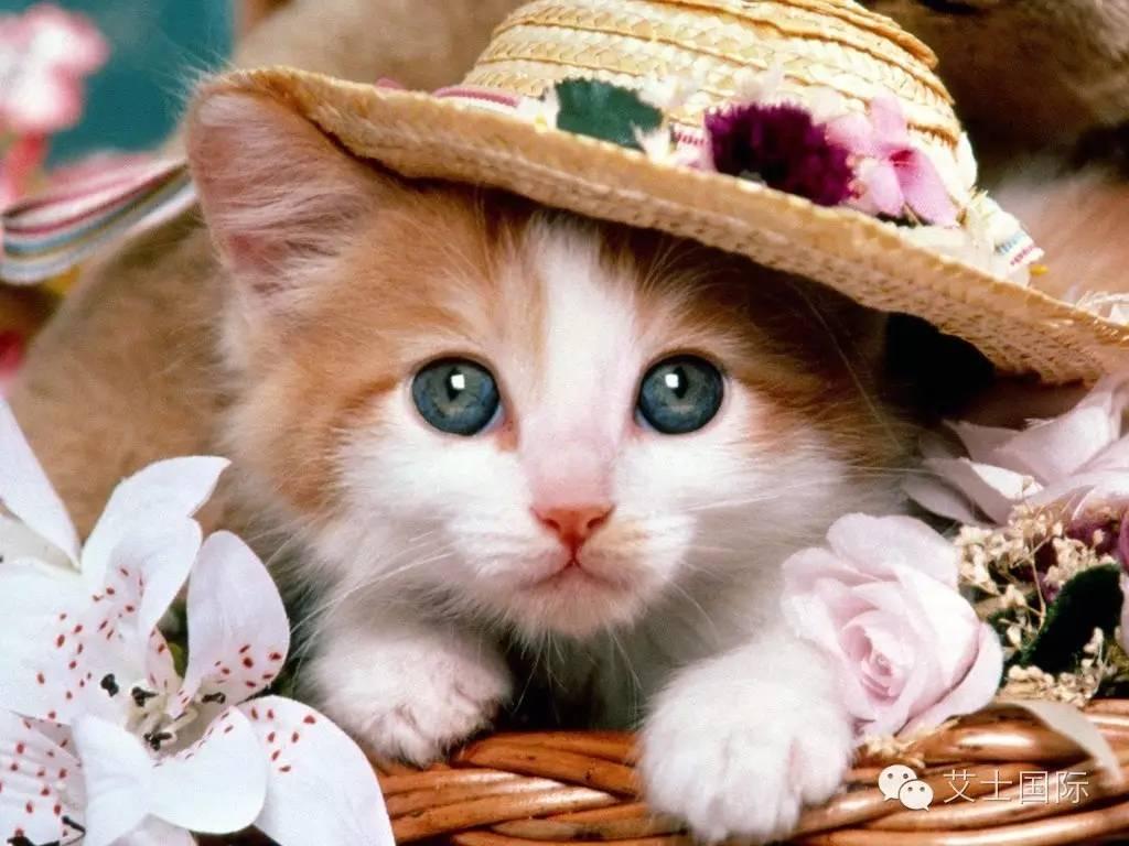 有一只小猫蹲在屋檐下呀图片