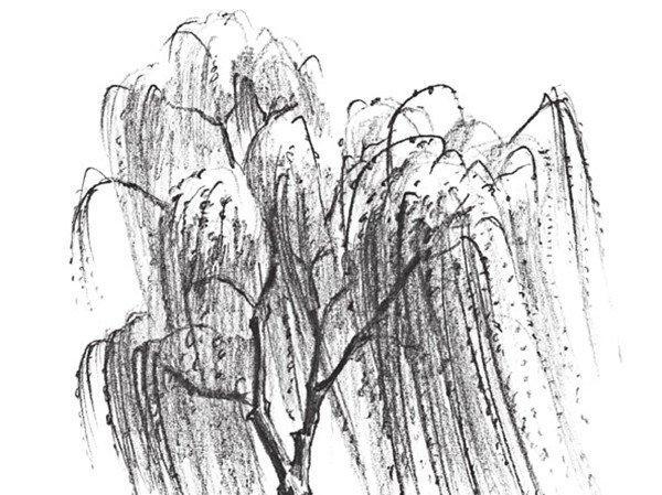 如何学素描——素描垂柳的绘画教程