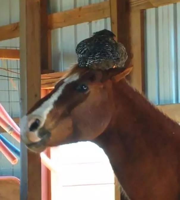 马的脸有多长
