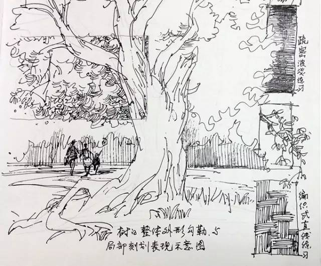 罗克中手绘教程:钢笔画入门不得不做的练习