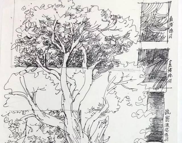 罗克中手绘教程 钢笔画入门不得不做的练习