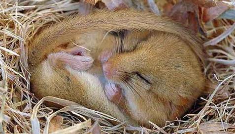 有什么动物会冬眠的