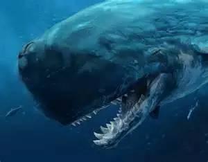 小小的藤壶竟隐藏着鲸鱼进化的奥秘