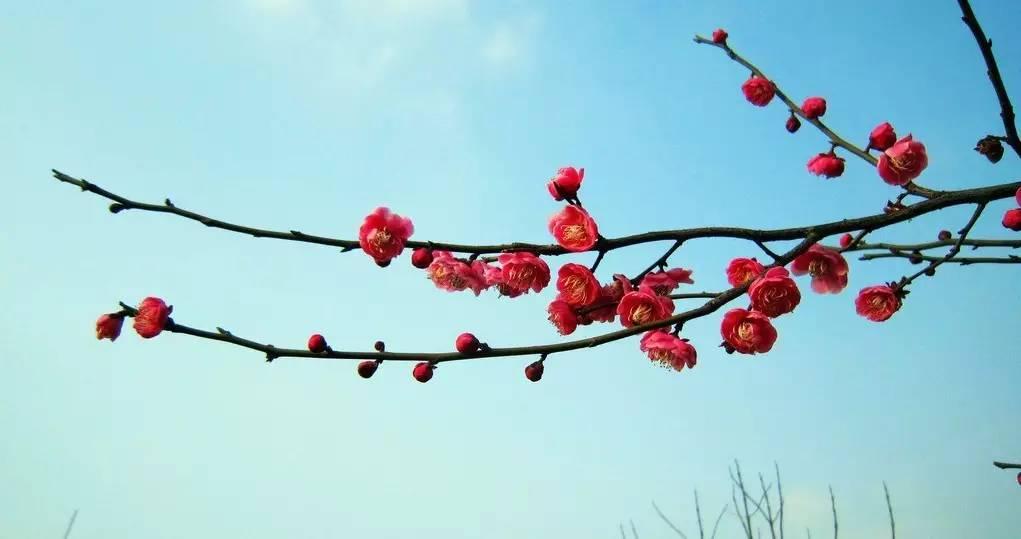 【独家新舞】从未见过这么漂亮的大扇子舞—张惠萍老师《一枝梅》图片