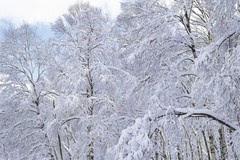 植物是如何度过冬天的?