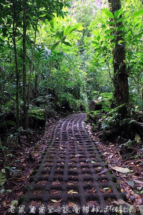 """在哥斯达黎加原始森林里做一回""""人猿泰山"""""""
