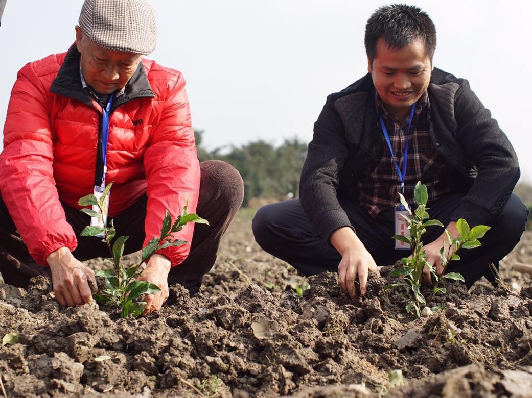 """茶旅世界粉丝茶园在名山区开建"""""""