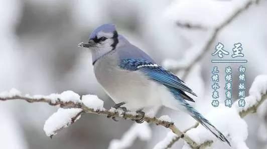 冬至一阳生,养好这一天,阳气充足一整年! - 清 雅 - 清     雅博客