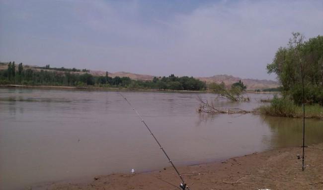 钓获一条罕见黄河鲤鱼,要价200一斤