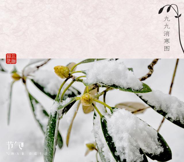 节气  冬至