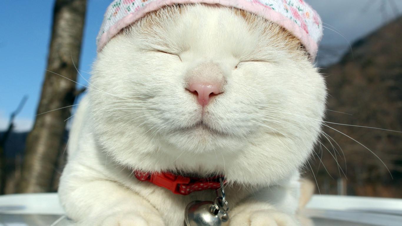 表情 主人趁猫咪睡著偷量 三围 ,结果猫咪醒后一脸懵逼,表情萌炸 ifuun 表情
