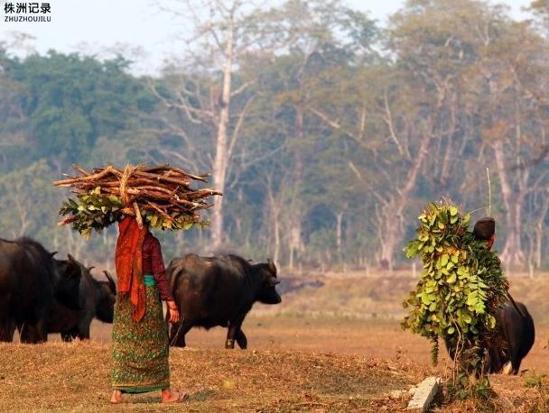 """走进尼泊尔:穿越丛林,奇特旺之旅"""""""