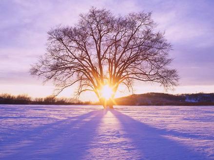 """为什么我冬天最爱去北海道!"""""""