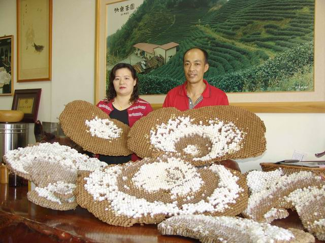 虎头蜂窝-一窝可以有两三百斤,能卖上万元的养殖